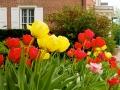 odessa_springflowers